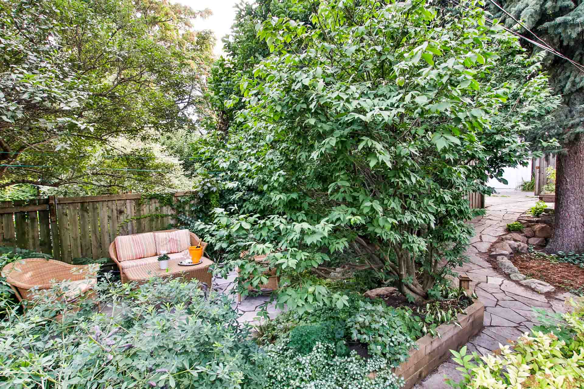 40_backyard